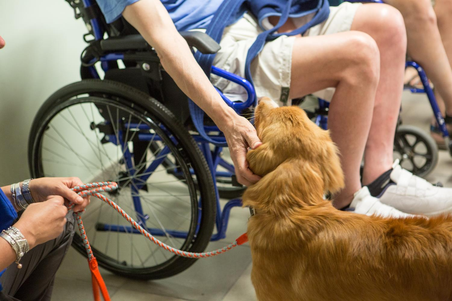 Intervento pet therapy con il cane presso disabile in sedia a rotelle